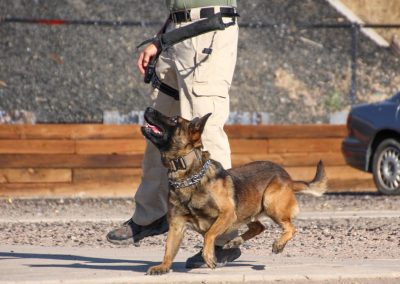 Canine Training with Officer